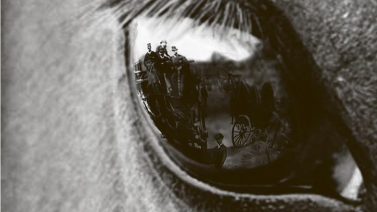 cropped-Dier-en-mens-poster-131C.jpg